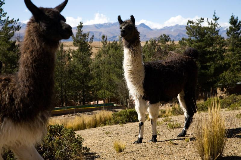 ecofarm, el alto, bolivia