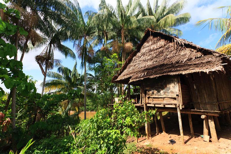chatka w amazonii